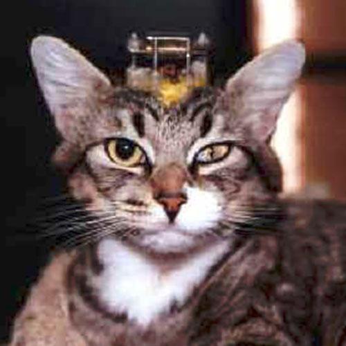 Fondation Brigitte Bardot stop experimentation animaux