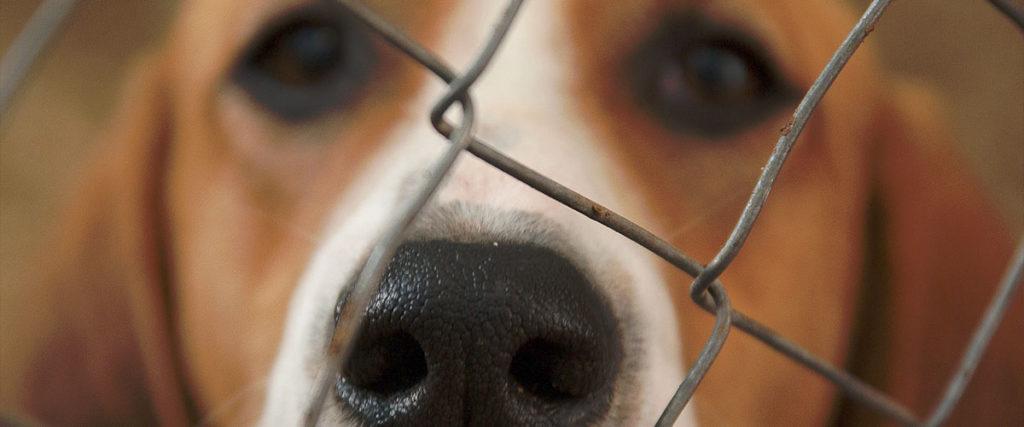 Fondation Brigitte Bardot experimentation animale chien