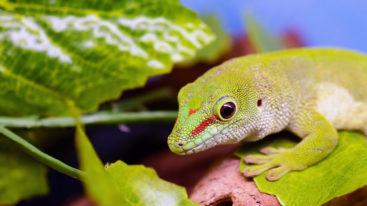 Sondage : 9 Français sur 10 pensent que les animaux sauvages exotiques ne devraient pas être des animaux de compagnie !