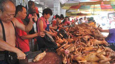 Lettre ouverte de Brigitte Bardot à Mr. Xi Jinping concernant le festival de Yulin