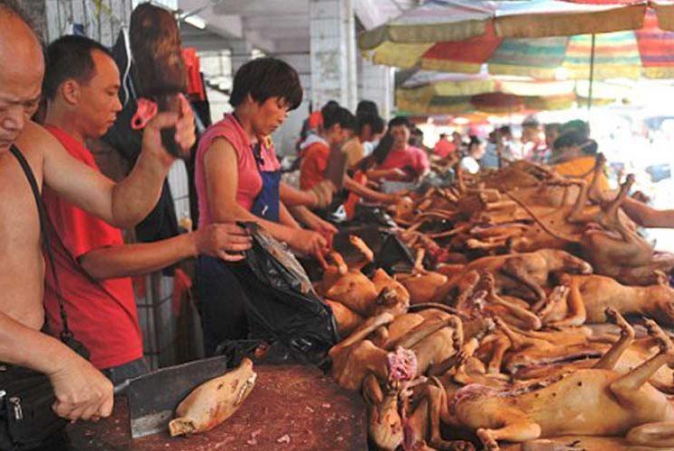 Fondation Brigitte Bardot STOP Yulin