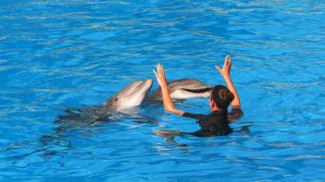 Pour un moratoire de la reproduction des cétacés en captivité : la FBB, C'est Assez et plusieurs associations interpellent Elisabeth Borne !