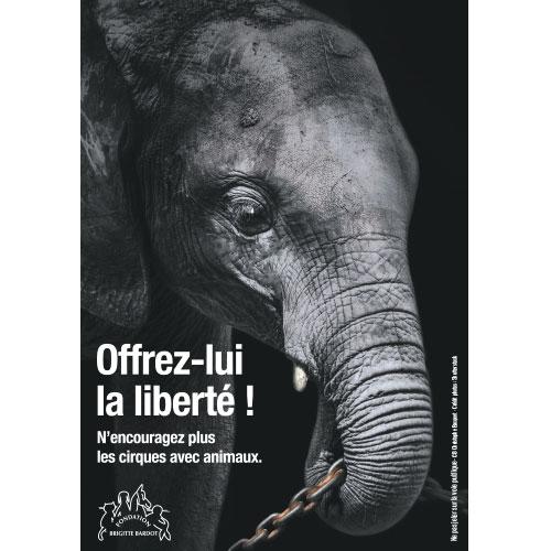 FBB cirque sans animaux