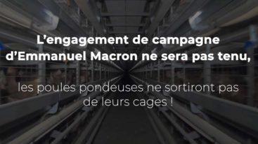 Images exclusives de la FBB dans un élevage de poules pondeuses dans la Drôme