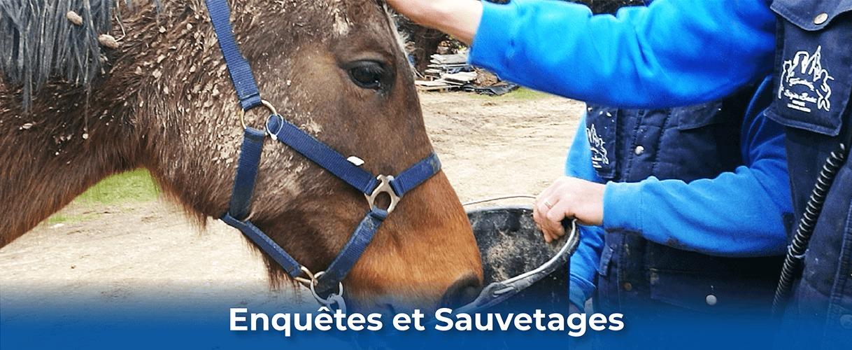 Fondation Brigitte Bardot enquete et sauvetage