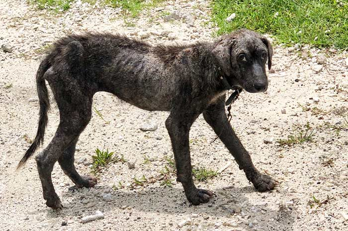 Fondation Brigitte Bardot aide internationale polynesie francaise sterilisation chiens errants