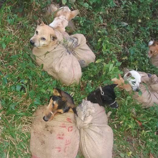 Fondation Brigitte Bardot consommation viande chieninde