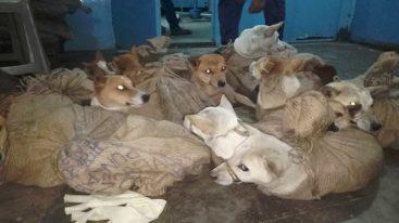 L'état de Nagaland en Inde, interdit la consommation et le commerce de viande de chien !