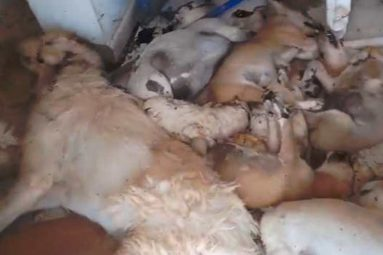 #IndignationDjerba – Massacre de chiens dans un refuge à Djerba !