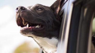 Les bons conseils de la Fondation pour partir en vacances avec votre animal