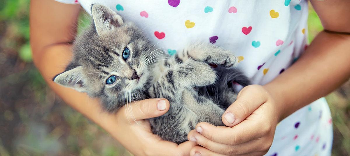 fondation brigitte bardot junior enfants animaux pedagogie protection animale