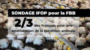Sondage Ifop : la Fondation Brigitte Bardot révèle l'adhésion des Français à 10 mesures phares de protection animale !