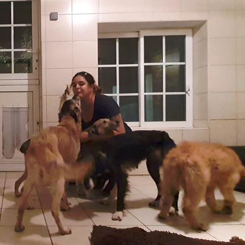 Fondation Brigitte Bardot bearn 42 chiens