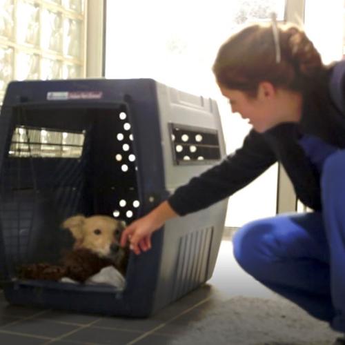 Fondation Brigitte Bardot 42 chiens detresse