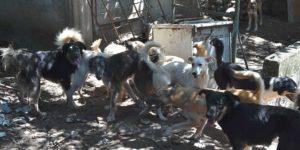 Fondation Brigitte Bardot sauvetage chiens