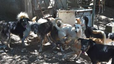 Sauvetage de 42 chiens dans le sud de la France (mise à jour !)