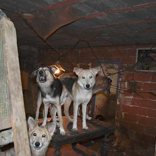 Fondation Brigitte Bardot Congo 42 chiens sud de la france