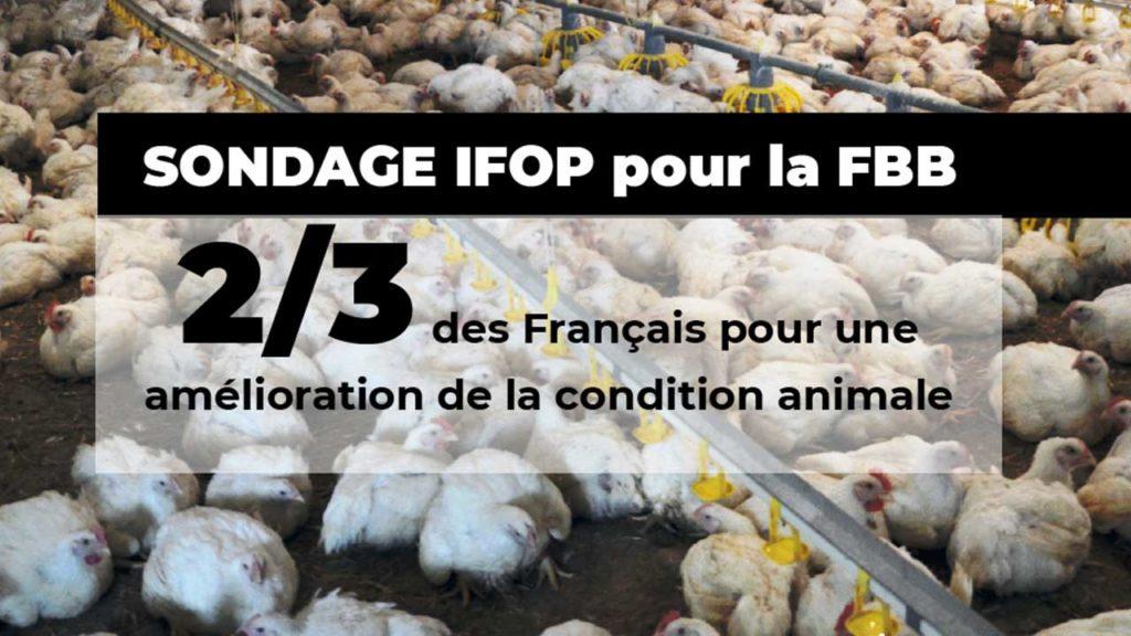 FBB sondage IFOP condition animale