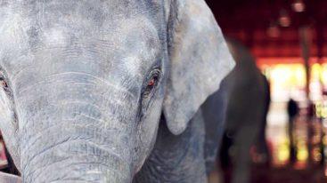 Animaux sauvages captifs : les annonces de Barbara Pompili