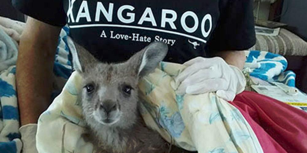 La FBB soutient Kangaroos Alive pour soigner les marsupiaux en Australie !