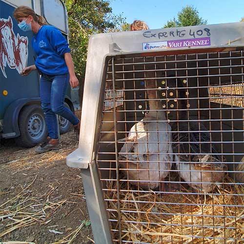 Fondation Brigitte Bardot animaux detresse