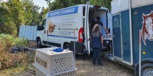 Fondation Brigitte Bardot sauvetage france