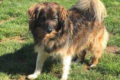 Conseils adoption : accueillir un chien