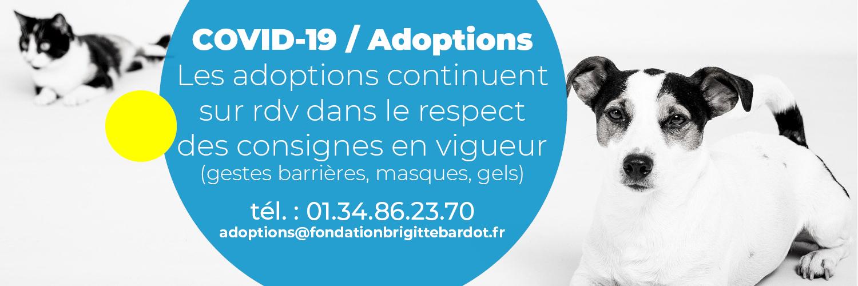 fondation brigitte bardot fondation brigitte bardot sondage loup