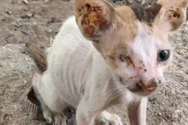 Massacre des animaux errants à Dubaï : «Je vous supplie de mettre un terme à ces ramassages»