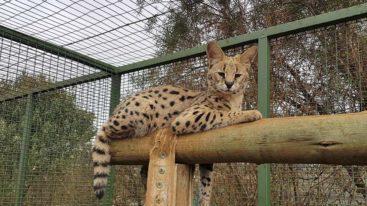 Nouvelle aide internationale : la FBB soutient FreeMe Wildlife en Afrique en Sud