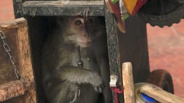 En Indonésie, la FBB soutient Jakarta Animal Aid Network (JAAN)