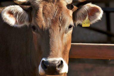 Taxer la viande pour lutter contre les pandémies