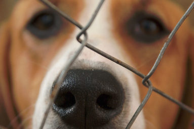 L'Assemblée Nationale adopte une « résolution européenne » relative à la protection du bien-être animal au sein de l'UE