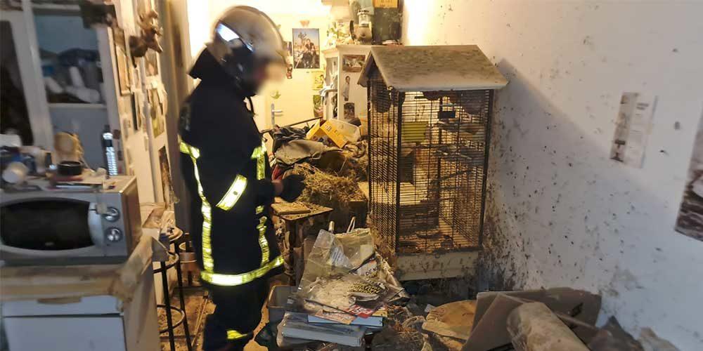 Un chien attaché à un radiateur, des lapins et oiseaux sauvés par la FBB !