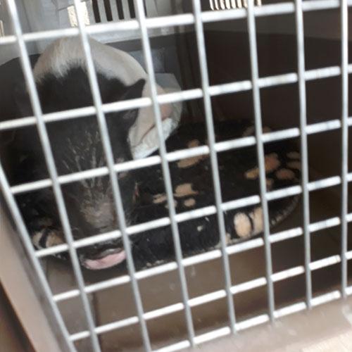 Fondation Brigitte Bardot sauvetage chien chat cochon