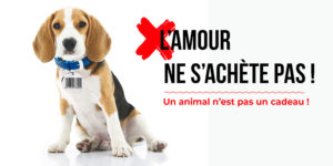 Fondation Brigitte Bardot Charte le bon coin