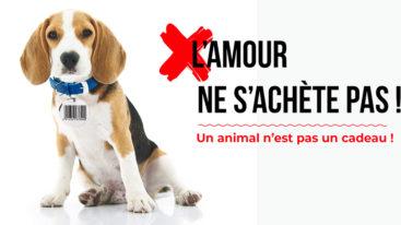 Suite au pseudo plan de lutte contre les abandons, la Fondation Brigitte Bardot s'exprime !