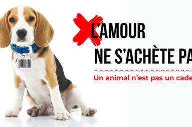 La FBB soutient la proposition de loi contre la maltraitance animale