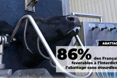 «La France doit rejoindre les pays qui imposent l'étourdissement des bêtes lors d'un abattage rituel» Brigitte Bardot s'adresse à Emmanuel Macron