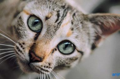 Animoscope, «l'expert du bien-être animal», partenaire de la Fondation Brigitte Bardot