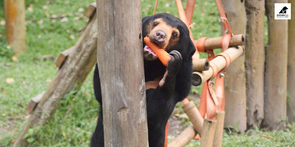 La Fondation Brigitte Bardot soutient Animals Asia en Chine et au Vietnam