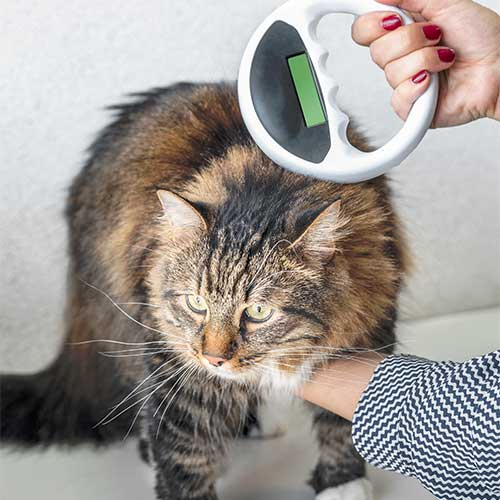 Fondation Brigitte Bardot identification chat amende
