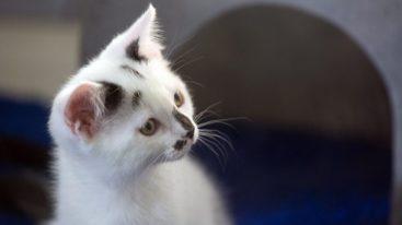Le gouvernement britannique profite du Brexit pour agir en faveur des animaux