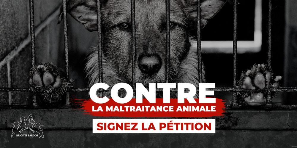 Ensemble, exigeons la fin de maltraitance animale !