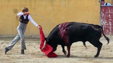 Stop à la corrida! La nouvelle campagne choc de la Fondation Brigitte Bardot dénonce un «spectacle garanti avec souffrance animale»