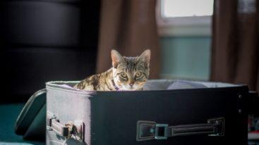 Départ en vacances : Comment bien voyager avec son animal de compagnie ?