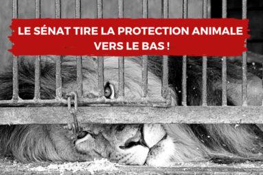 PPL contre la maltraitance animale : Le Sénat tire la protection animale vers le bas