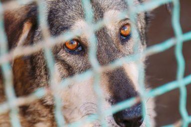 Condition animale : sénateurs et députés s'entendent sur un texte qui apporte des avancées majeures !