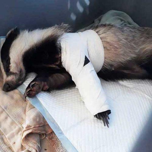 fondation brigitte bardot confinement centres de soins faune sauvage alerte urgence gouvernement