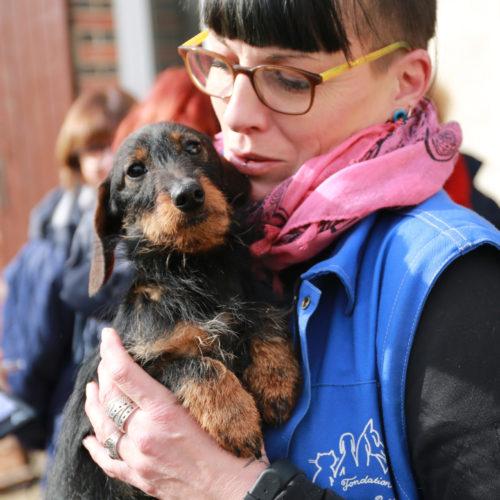 service juridique sauvetage chiens elevage